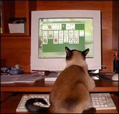 Cat Playing Solatair on Computer